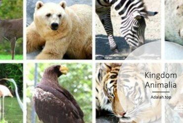 Kingdom animalia -- ciri, klasifikasi, reproduksi, contoh, jenis