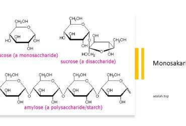 Monosakarida adalah -- contoh, pengertian, komposisi, klasifikasi