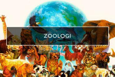Zoologi adalah -- pengertian, cabang, profesi