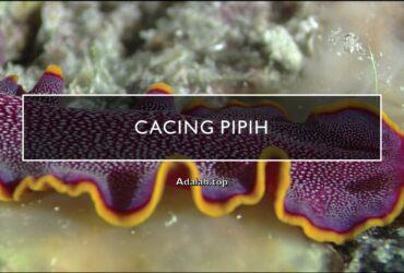 Platyhelminthes: Klasifikasi, ciri, morfologi, contoh