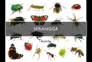 Serangga adalah: Ciri, klasifikasi, bagian, manfaat, contoh