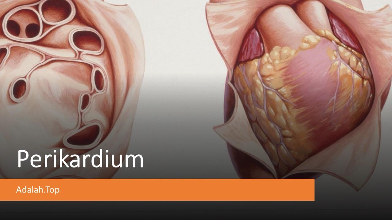 Fungsi Perikardium: Lapisan, gangguan, Pengertian