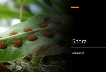 Spora adalah -- jenis, struktur, pembentukan, klasifikasi