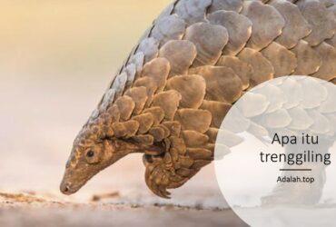 Apa itu trenggiling -- ciri, habitat, sejarah evolusi