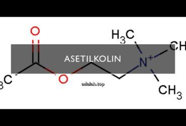 Asetilkolin adalah -- cara kerja, sintesis, fungsi, reseptor