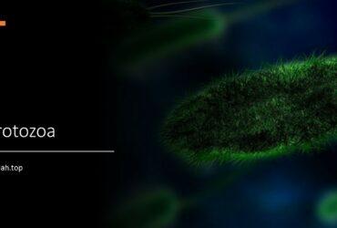 Ciri-ciri protozoa (protista mirip hewan), klasifikasi, contoh, habitat, makanan