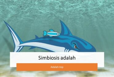 Simbiosis -- pengertian, ciri, jenis, contoh, peranan