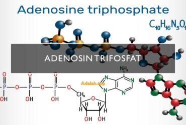 Adenosin trifosfat (ATP): Pengertian, fungsi, Produksi
