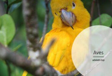 Ciri-ciri Aves (burung) seperti berikut