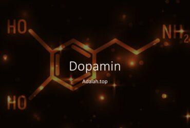 Dopamin: apa itu dan apa yang dilakukannya di tubuh kita
