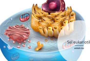 Sel eukariotik: Ciri, reproduksi, contoh, struktur, perbedaan