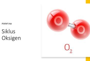 Siklus oksigen adalah, pengertian, tahapan, peranan