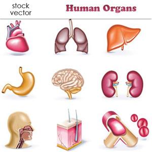 Sistem-Organ-Tubuh-Manusia